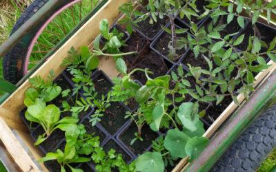 30 mai : troc de plantes