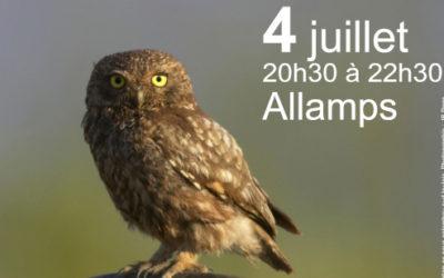 4 juillet : à la rencontre des rapaces nocturnes à Allamps
